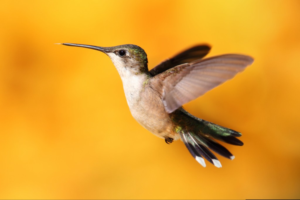 google hummingbird update website design in fl
